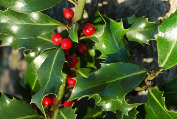 Oldbury Cottage Care Farm - Christmas Wreaths